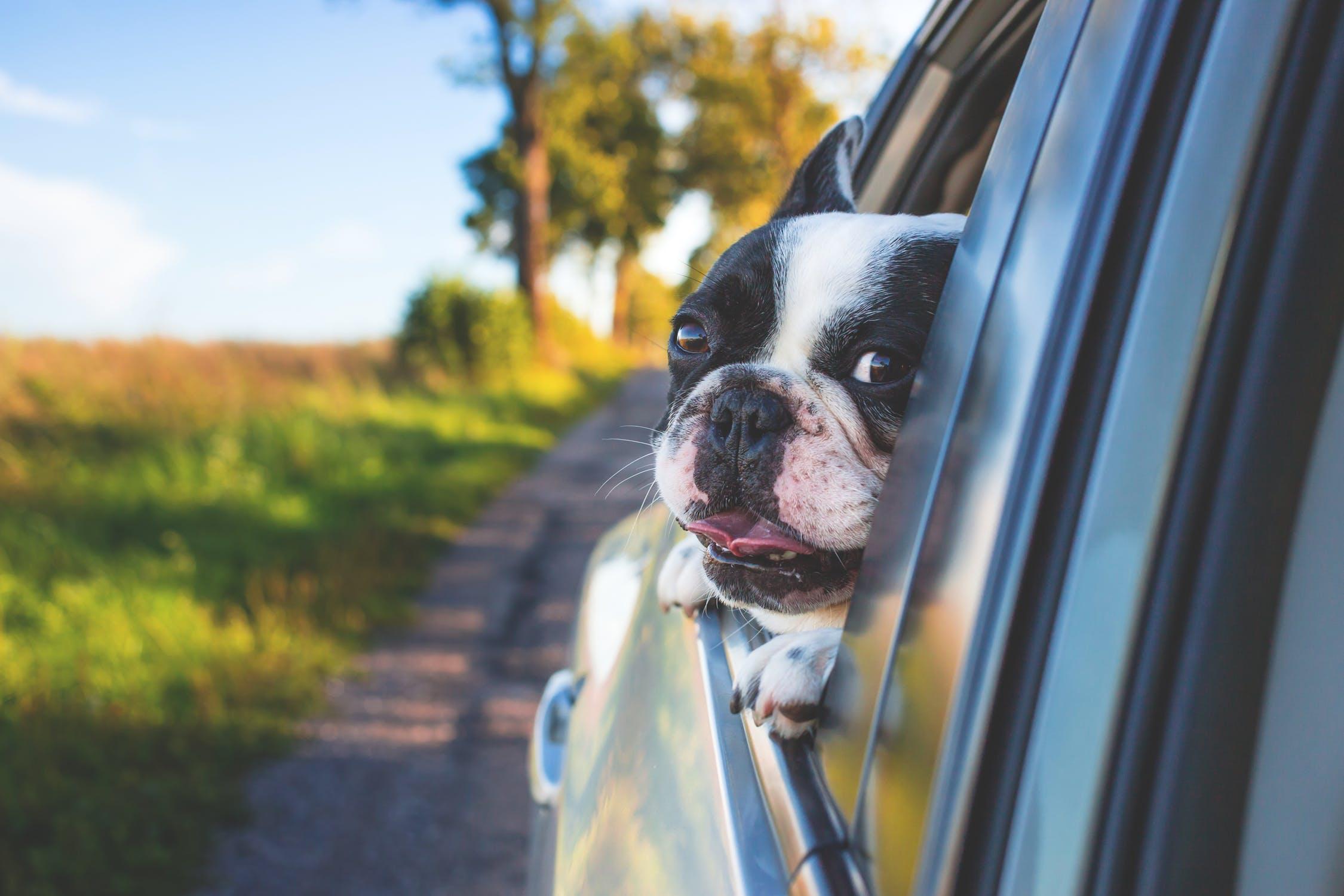 dog friendly Archives - Escape to Blue Ridge Blog   North